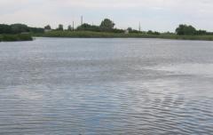 Якість води в озерах Чисте та Паркове вкрай незадовільна